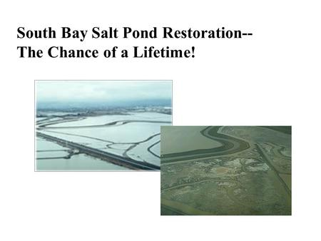 South Bay Salt Pond Restoration-- The Chance of a Lifetime!