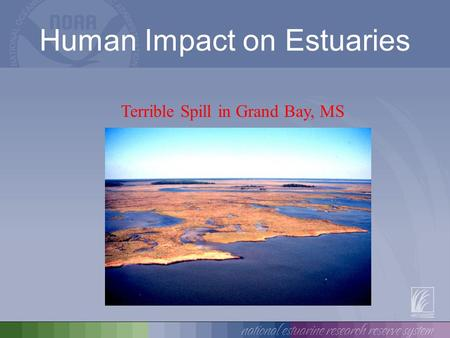 Human Impact on Estuaries Terrible Spill in Grand Bay, MS.