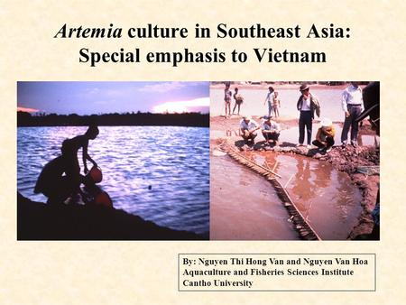Artemia culture in Southeast Asia: Special emphasis to Vietnam By: Nguyen Thi Hong Van and Nguyen Van Hoa Aquaculture and Fisheries Sciences Institute.