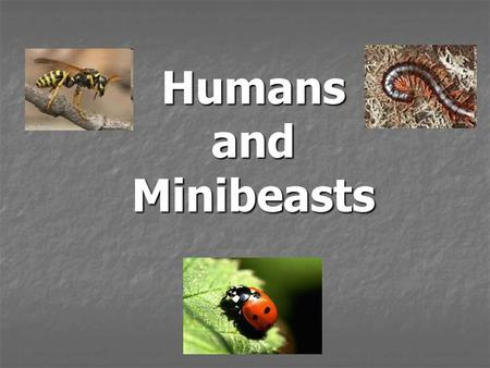 Humans and Minibeasts.