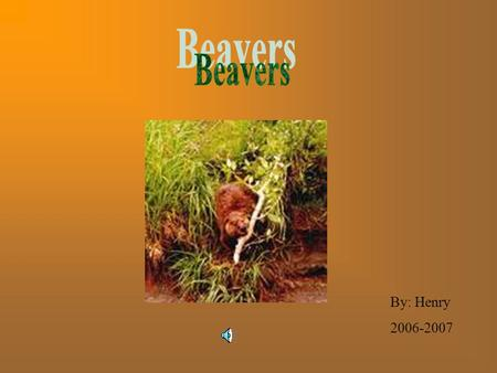 By: Henry 2006-2007 The North American beaver is also called the Castor Canadensis, it is a big web-footed, semi-aquatic rodent, it has brown fur with.