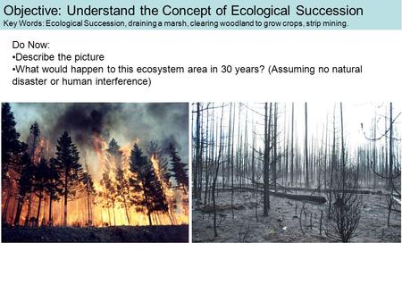 Objective: Understand the Concept of Ecological Succession Key Words: Ecological Succession, draining a marsh, clearing woodland to grow crops, strip mining.