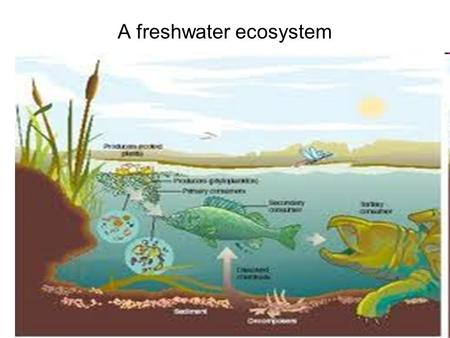 1 A freshwater ecosystem. 2 3 Pondfish Ecosystem An ecosystem is a dynamic complex of plant, animal,and microorganism communities and the nonliving environment,