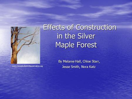 Effects of Construction in the Silver Maple Forest Effects of Construction in the Silver Maple Forest By Melanie Hall, Chloe Starr, Jesse Smith, Nora Katz.