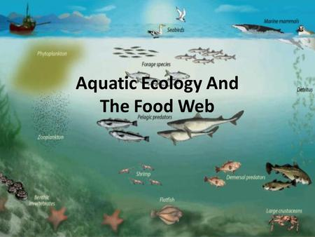 Aquatic Ecology And The Food Web. some Understanding of the aquatic ecosystem is necessary before fisheries managers or pond owners can begin to understand.