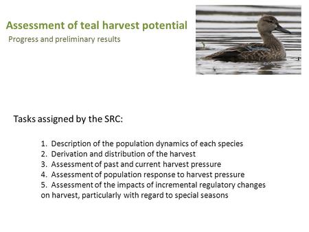 Assessment of teal harvest potential Progress and preliminary results 1. Description of the population dynamics of each species 2. Derivation and distribution.
