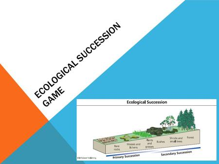 Ecological Succession Game