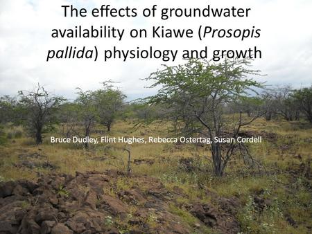 The effects of groundwater availability on Kiawe (Prosopis pallida) physiology and growth Bruce Dudley, Flint Hughes, Rebecca Ostertag, Susan Cordell.