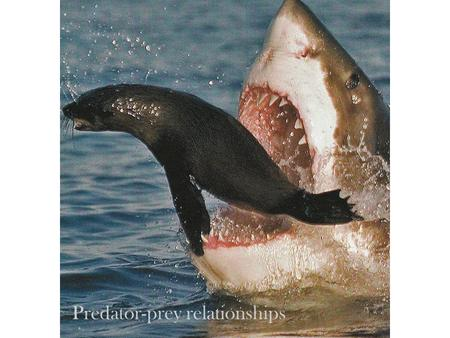 Predator-prey relationships. Predation is a straight-forward interspecies population interaction. One species uses another as a food resource. Predators.