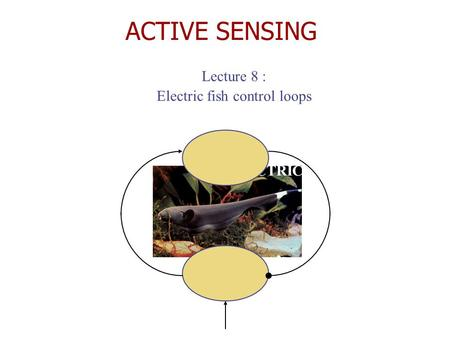 ACTIVE SENSING Lecture 8 : Electric fish control loops ELECTRIC FISH.