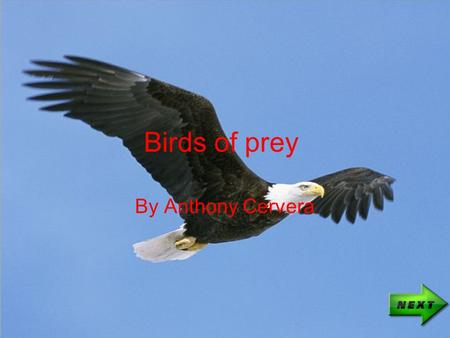 "Birds of prey By Anthony Cervera. Bald eagle Known as the ""American eagle Beat the Turkey for the election of country bird Diet: Fish, rodents, sometimes."