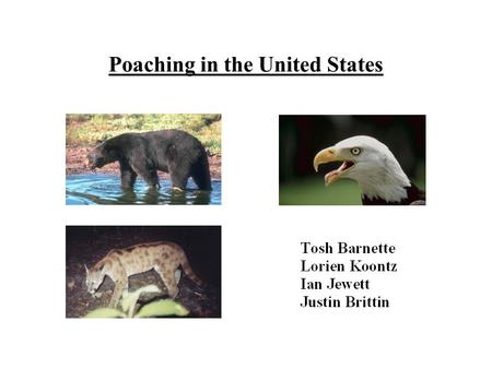 Poaching in the United States. Definition: Poaching is the hunting and killing of any animal illegally.