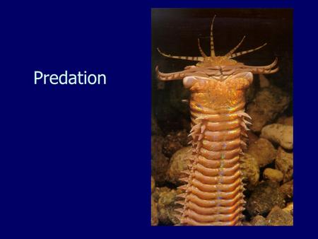 Predation. Key Topics Types of predation. Effects of predation on prey populations and communities. The Refuge Theory. The keystone Predator Theory.