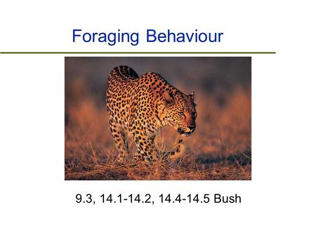 Foraging Behaviour 9.3, 14.1-14.2, 14.4-14.5 Bush.