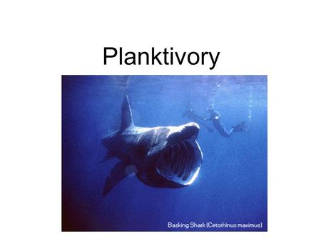 Planktivory. Suspension feeders: Animals that process large quantities of water through a feeding apparatus (gill rakers, baleen). Gill rakers trap particles.