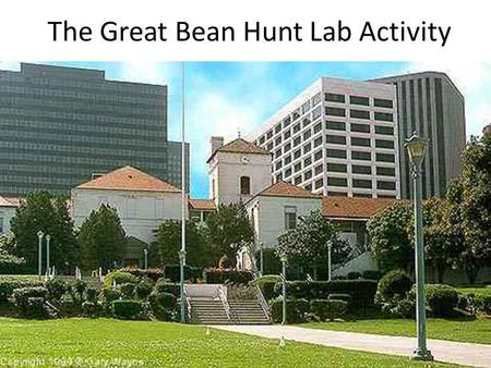The Great Bean Hunt Lab Activity