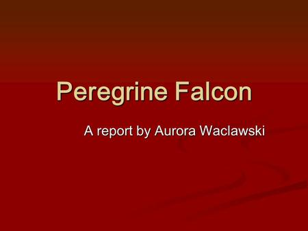 Peregrine Falcon A report by Aurora Waclawski. 1 What is a Peregrine Falcon? A peregrine Falcon is a small but very fast falcon. They are one of the fastest.