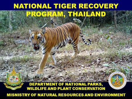 NATIONAL TIGER RECOVERY PROGRAM, THAILAND DEPARTMENT OF NATIONAL PARKS, WILDLIFE AND PLANT CONSERVATION MISNISTRY OF NATURAL RESOURCES AND ENVIRONMENT.