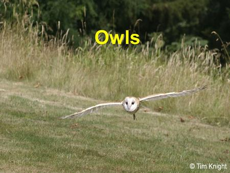Owls. Owls are nocturnal hunting birds with eyes that face forwards. They are closely related to hawks. Owls sleep during the day and emerge at night.