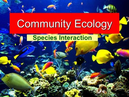 Community Ecology Species Interaction.