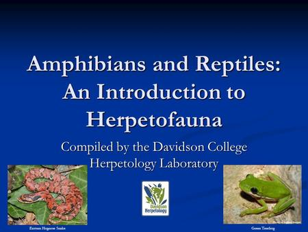 Amphibians and Reptiles: An Introduction to Herpetofauna Compiled by the Davidson College Herpetology Laboratory Eastern Hognose SnakeGreen Treefrog.