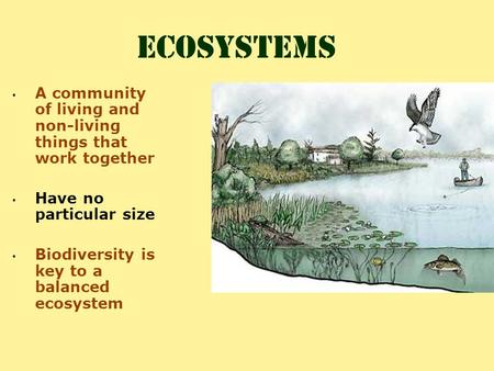 Ecosystems A community of living and non-living things that work together Have no particular size Biodiversity is key to a balanced ecosystem.