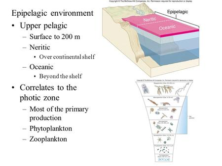 Epipelagic environment Upper pelagic –Surface to 200 m –Neritic Over continental shelf –Oceanic Beyond the shelf Correlates to the photic zone –Most of.