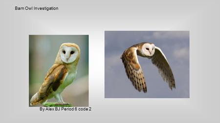 Barn Owl Investigation By Alex BJ Period 6 code 2.