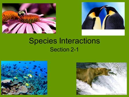 "Species Interactions Section 2-1. Species Interactions Species within a community develop close interactions, known as symbiosis. –""Sym"" means together."