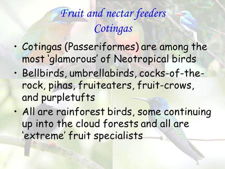Fruit and nectar feeders Cotingas Cotingas (Passeriformes) are among the most 'glamorous' of Neotropical birds Bellbirds, umbrellabirds, cocks-of-the-