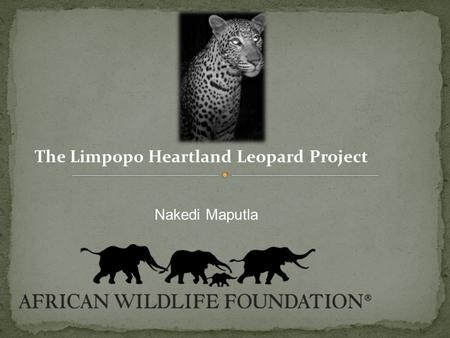 Nakedi Maputla The Limpopo Heartland Leopard Project.