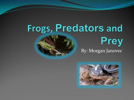By: Morgan Janovec. An interesting diet Frogs are mostly carnivores. Although some of them eat fruit. Different frogs have different ways of eating. Some.
