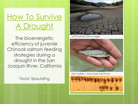 How To Survive A Drought The bioenergetic efficiency of juvenile Chinook salmon feeding strategies during a drought in the San Joaquin River, California.