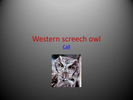 Western screech owl Call Call. The scientific name for this bird of prey is otus kennicottii What makes a bird of prey a bird of prey is it has sharp.