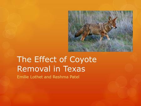 The Effect of Coyote Removal in Texas Emilie Lothet and Reshma Patel.