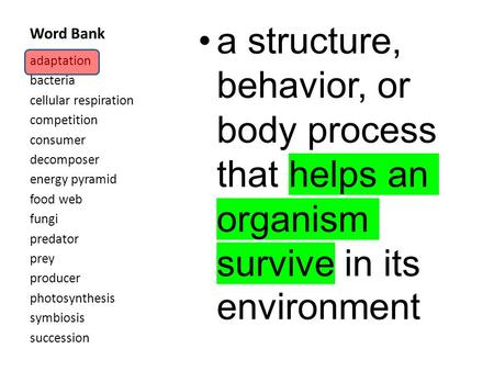 Word Bank a structure, behavior, or body process that helps an organism survive in its environment adaptation bacteria cellular respiration competition.