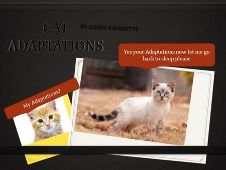 CAT ADAPTATIONS BY ALYSSA NAVRRETTE My Adaptations? Yes your Adaptations now let me go back to sleep please.