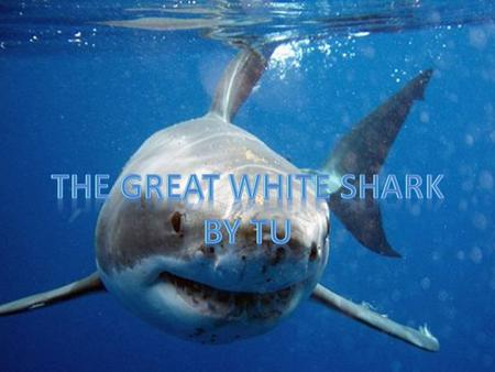 The Great White Shark By tu.