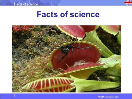 © 2014 wheresjenny.com Facts of science. © 2014 wheresjenny.com Facts of science What are Carnivorous Plants? Carnivorous plants are predatory flowering.
