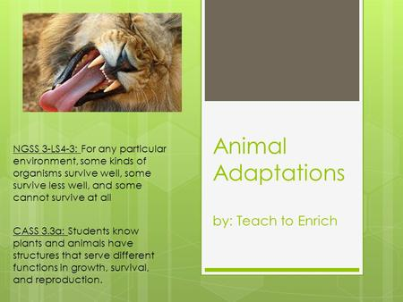 Animal Adaptations by: Teach to Enrich NGSS 3-LS4-3: For any particular environment, some kinds of organisms survive well, some survive less well, and.