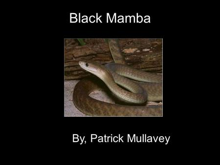 Black Mamba By, Patrick Mullavey. General Information The black mamba is a reptile. Its scientific name is dendroaspis polylepsis They generally live.