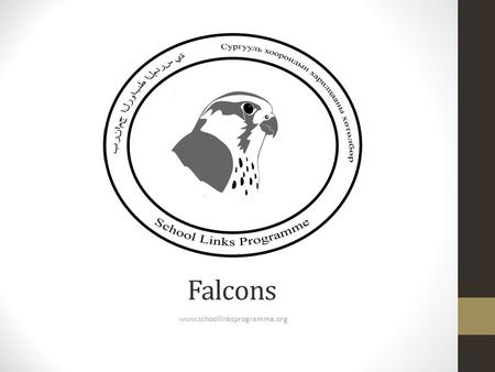 Falcons www.schoollinksprogramme.org. A falcon is a bird A bird has light, hollow bones No teeth and use their beaks to break up food Feathers insulate.