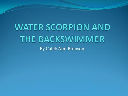WATER SCORPION AND THE BACKSWIMMER