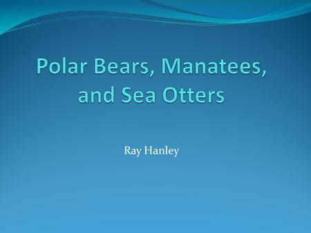 Ray Hanley. Polar Bears About the Polar Bear Ursus maritimus A.K.A the sea bear Polar bears range throughout the Arctic World's largest land predators.