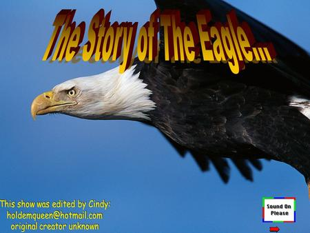 The Story of The Eagle… This show was edited by Cindy: