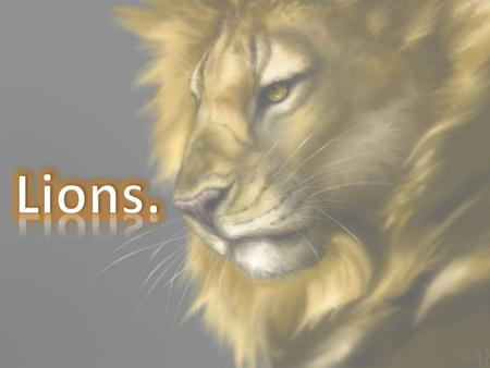Lions are big cats and they are predators. Lions are awesome animals and no wonder they are called kings of beasts.