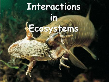 Interactions in Ecosystems. Habitat All of the biotic and abiotic factors in the area where an organism lives All of the biotic and abiotic factors in.