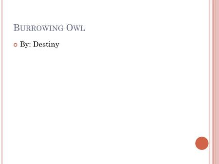 B URROWING O WL By: Destiny. PHYSICAL CHARACTERISTICS The Burrowing Owl is 10 inches long. The Burrowing Owl only weighs 6oz. The Burrowing Owl's color.