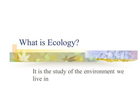 What is Ecology? It is the study of the environment we live in.