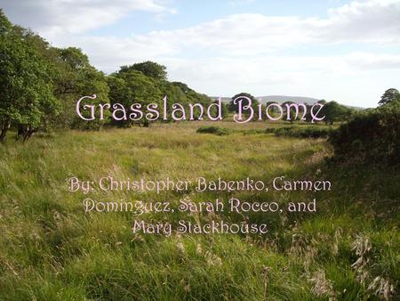 Grassland Biome By: Christopher Babenko, Carmen Dominguez, Sarah Rocco, and Mary Stackhouse.